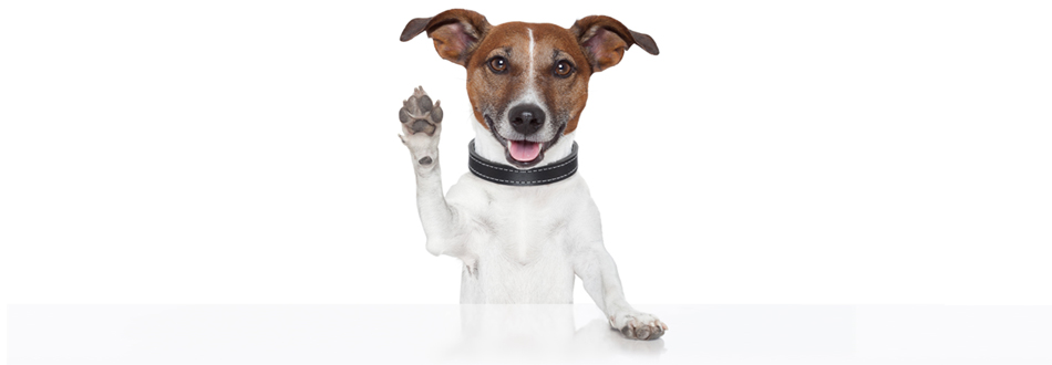 Who here is itchy? Rid your home of fleas without harming Fido.